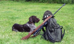 Le chien se familiarise avec le fusil.